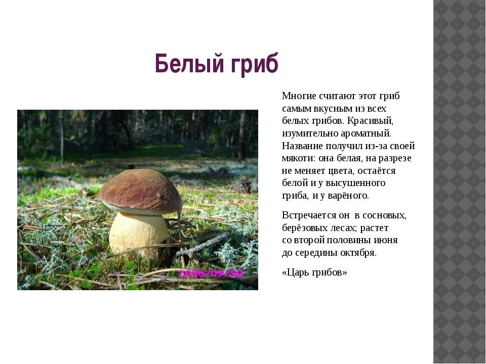 Белый гриб Многие считают этот гриб самым вкусным извсех белых грибов. Краси...