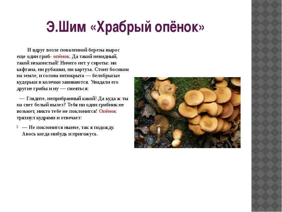 Э.Шим «Храбрый опёнок» И вдруг возле поваленной березы вырос еще один гриб- о...