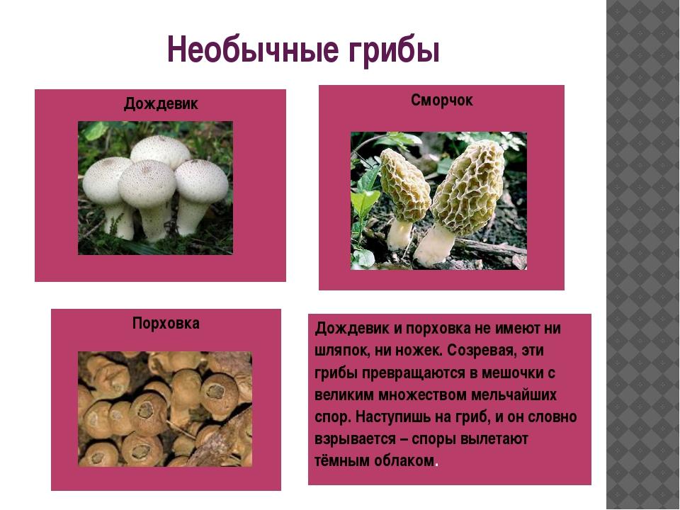 Необычные грибы Сморчок Порховка Дождевик Дождевик ипорховкане имеют ни шляпо...