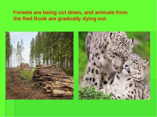 Forests are being cut down, and animals from the Red Book are gradually dying