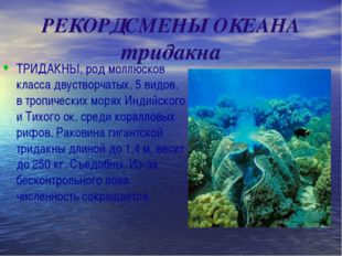 РЕКОРДСМЕНЫ ОКЕАНА тридакна ТРИДАКНЫ, род моллюсков класса двустворчатых, 5 в