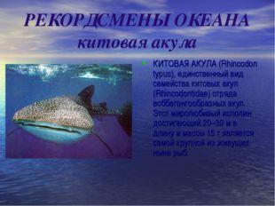 РЕКОРДСМЕНЫ ОКЕАНА китовая акула КИТОВАЯ АКУЛА (Rhincodon typus), единственны