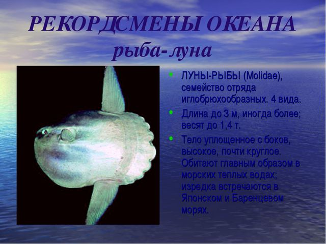 РЕКОРДСМЕНЫ ОКЕАНА рыба-луна ЛУНЫ-РЫБЫ (Molidae), семейство отряда иглобрюхоо...