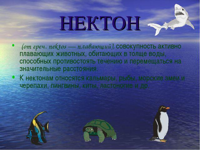 НЕКТОН (от греч. nektos — плавающий), совокупность активно плавающих животных...