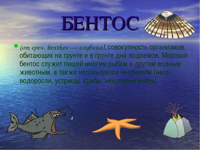 БЕНТОС (от греч. benthos — глубина), совокупность организмов, обитающих на гр...