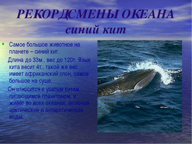 РЕКОРДСМЕНЫ ОКЕАНА синий кит Самое большое животное на планете – синий кит....