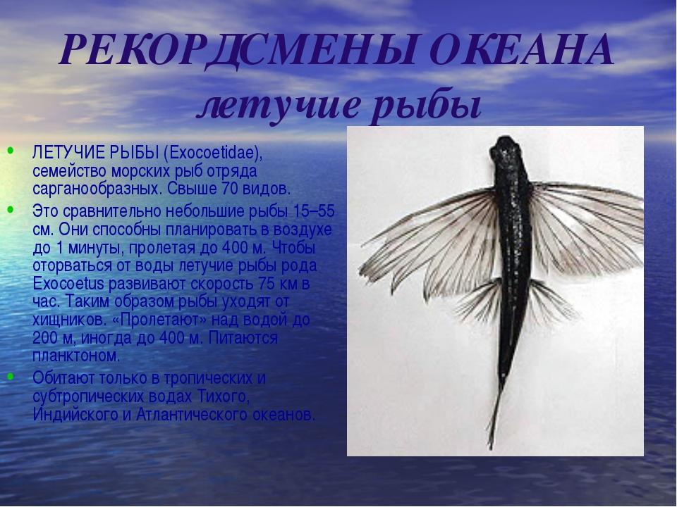 РЕКОРДСМЕНЫ ОКЕАНА летучие рыбы ЛЕТУЧИЕ РЫБЫ (Exocoetidae), семейство морских...