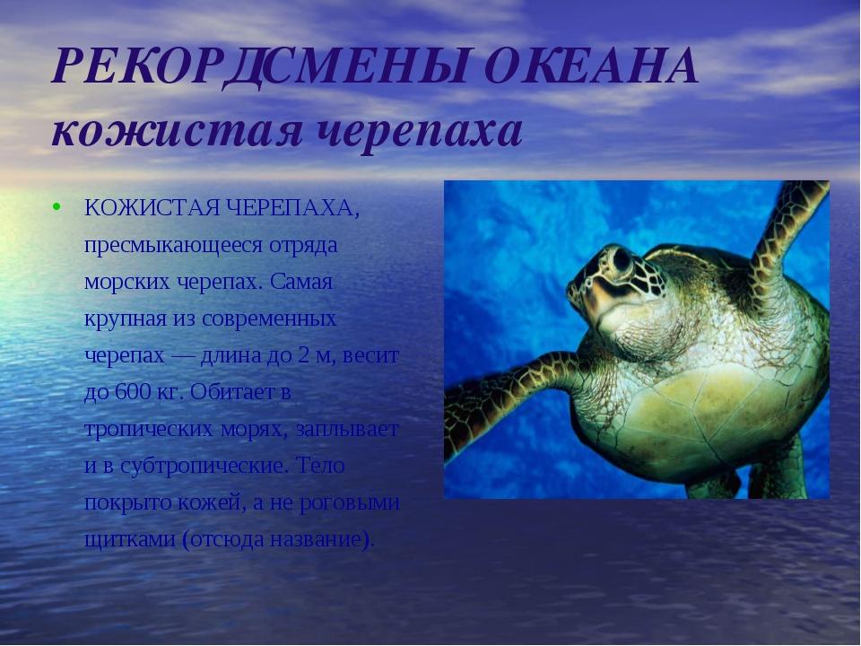 РЕКОРДСМЕНЫ ОКЕАНА кожистая черепаха КОЖИСТАЯ ЧЕРЕПАХА, пресмыкающееся отряда...
