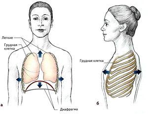 Изменение объема грудной полости при вдохе