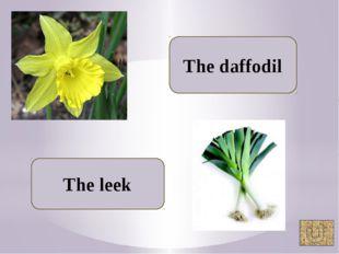 The daffodil The leek