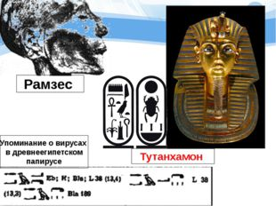 Тутанхамон Рамзес Упоминание о вирусах в древнеегипетском папирусе