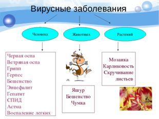 Вирусные заболевания Человека Животных Растений Черная оспа Ветряная оспа Гри