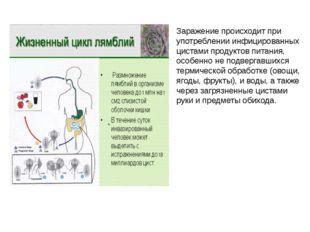Заражение происходит при употреблении инфицированных цистами продуктов питани