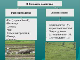 Растениеводство Животноводство -Рис (родина Китай); -Пшеница; -Хлопок; -Чай;