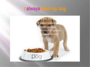I always feed my dog