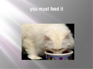 you must feed it