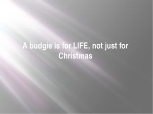 A budgie is for LIFE, not just for Christmas