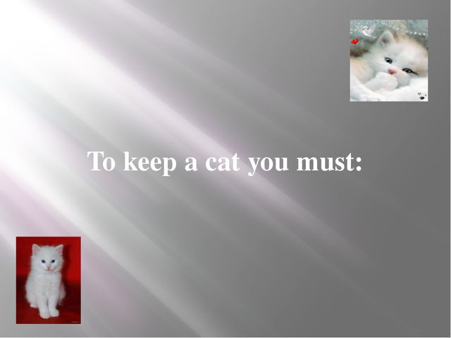 To keep a cat you must: