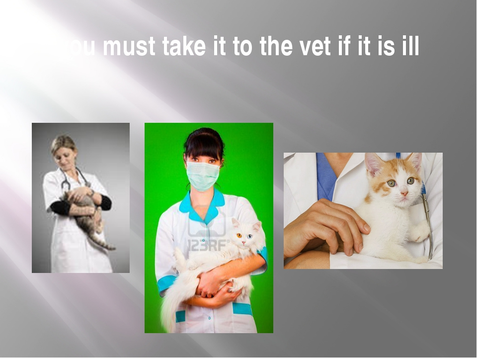 you must take it to the vet if it is ill