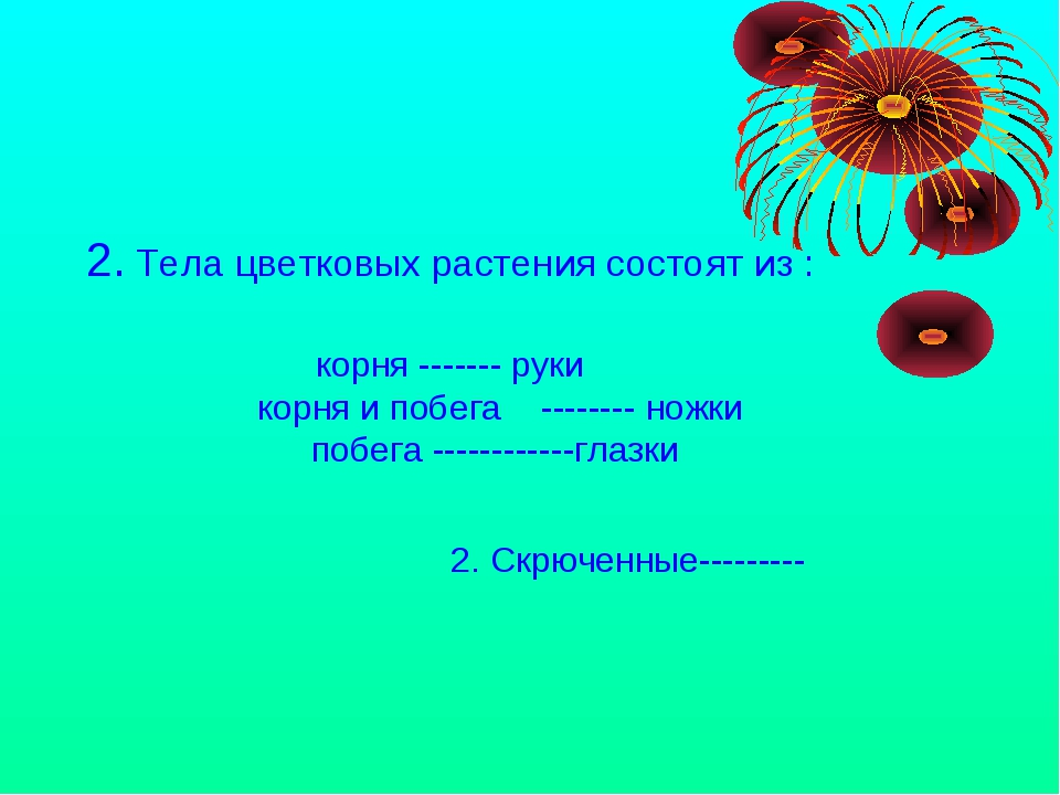 2. Тела цветковых растения состоят из : корня ------- руки корня и побега --...