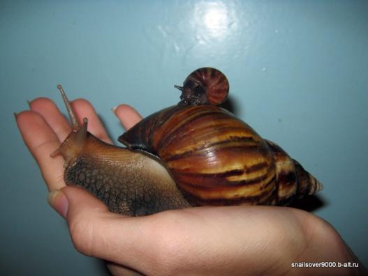 http://snailsover9000.b-alt.ru/wp-content/uploads/2011/09/IMG_5063.jpg