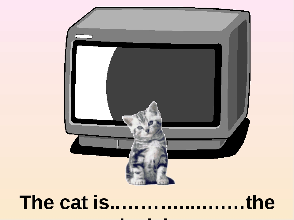 in front of The cat is..………....….…the television