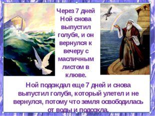 Через 7 дней Ной снова выпустил голубя, и он вернулся к вечеру с масличным ли
