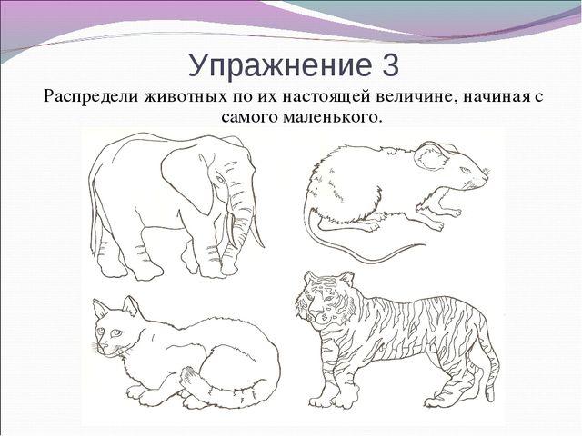 Упражнение 3 Распредели животных по их настоящей величине, начиная с самого м...