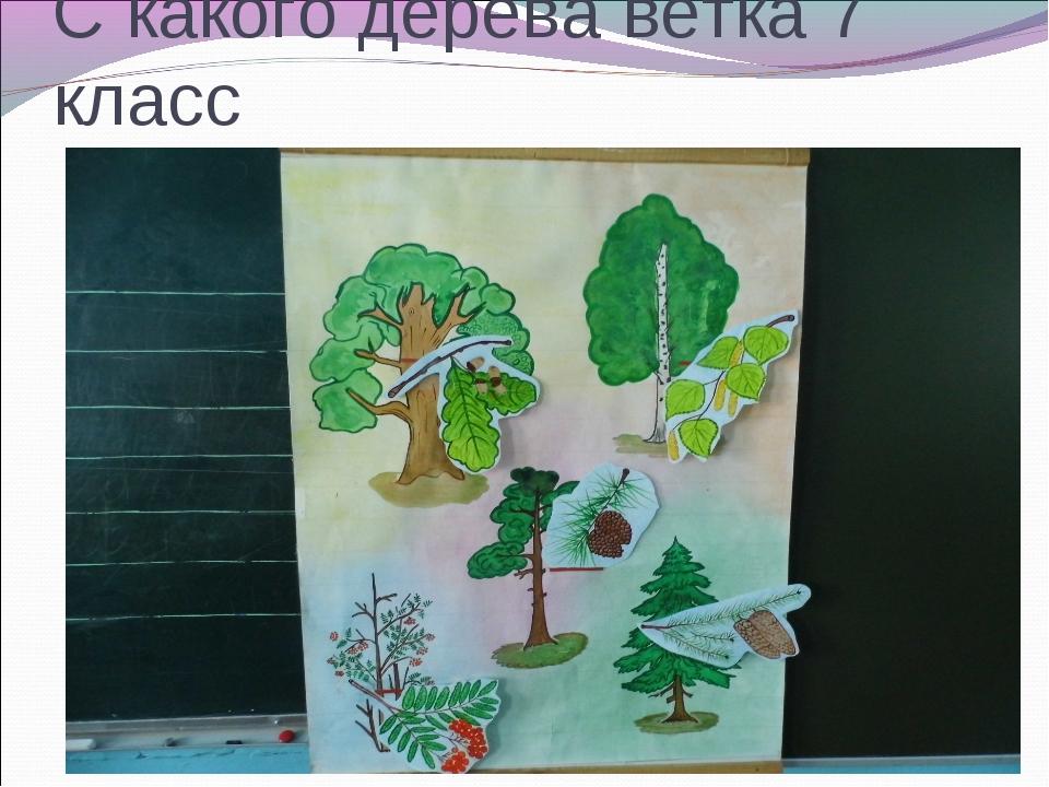 С какого дерева ветка 7 класс