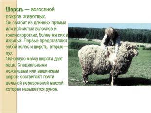 Шерсть — волосяной покров животных. Он состоит из длинных прямых или волнисты