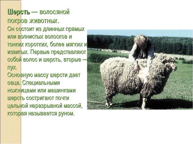 Шерсть — волосяной покров животных. Он состоит из длинных прямых или волнисты...