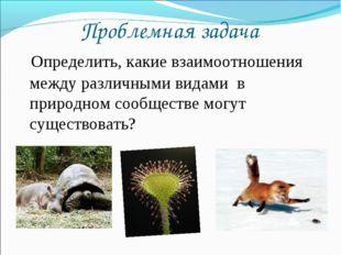 Проблемная задача Определить, какие взаимоотношения между различными видами в
