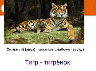 Сильный (звук) помогает слабому (звуку) Тигр - тигрёнок