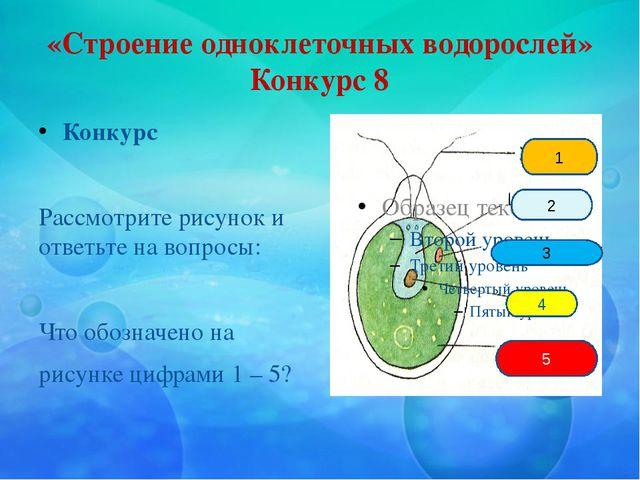 «Строение одноклеточных водорослей» Конкурс 8 Конкурс Рассмотрите рисунок и о...