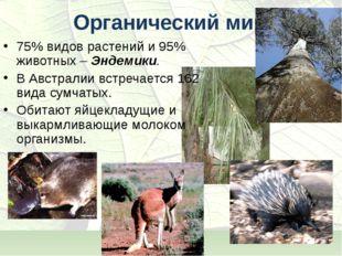 Органический мир 75% видов растений и 95% животных – Эндемики. В Австралии вс