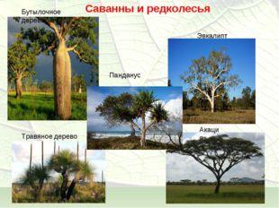 Саванны и редколесья Бутылочное дерево Травяное дерево Панданус Акация Эвкалипт