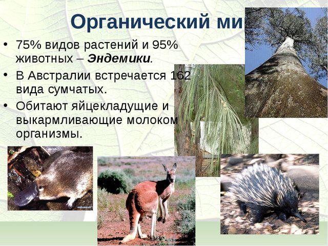 Органический мир 75% видов растений и 95% животных – Эндемики. В Австралии вс...