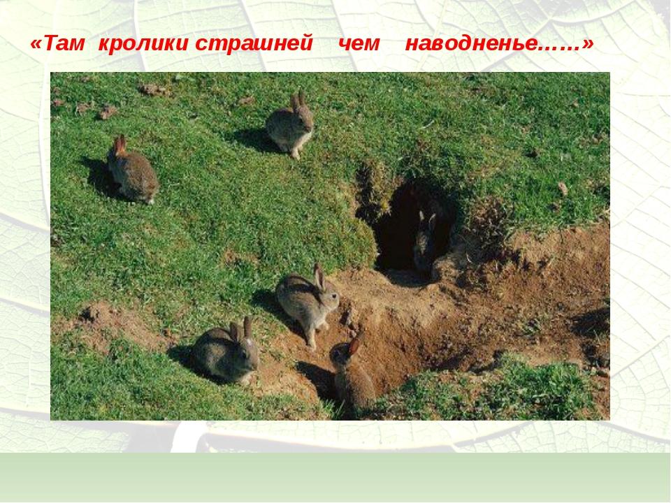 «Там кролики страшней чем наводненье……»