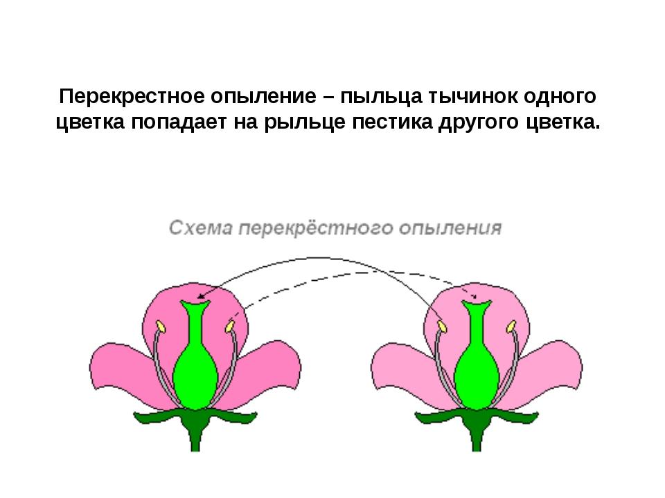 Картинка опыления цветка