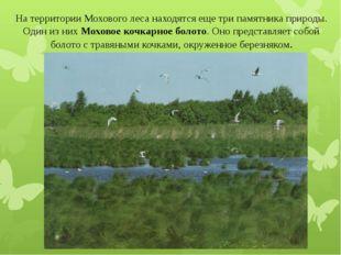 На территории Мохового леса находятся еще три памятника природы. Один из них