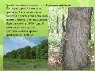 Третий памятник природы – это Ермаковский парк. Лесокультурный памятник приро