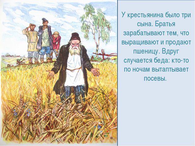 У крестьянина было три сына. Братья зарабатывают тем, что выращивают и продаю...