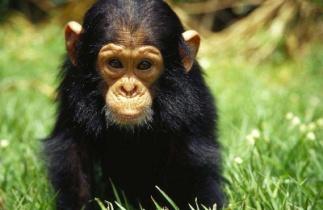 http://www.travelhouseuk.co.uk/news/wp-content/uploads/Uganda-Wildlife-Education-Centre.jpg