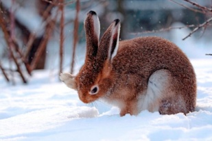 http://animalphotos.ru/photo/8b/8b683b9e6e9a46484d0a859b8ae90e3e.jpg