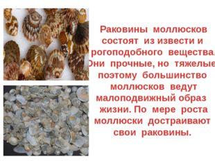 Раковины моллюсков состоят из извести и рогоподобного вещества. Они прочные,