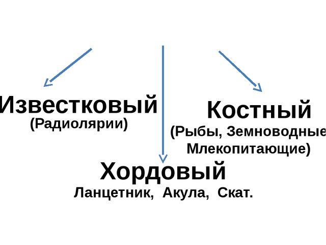 Внутренний скелет Известковый (Радиолярии) Хордовый Ланцетник, Акула, Скат....