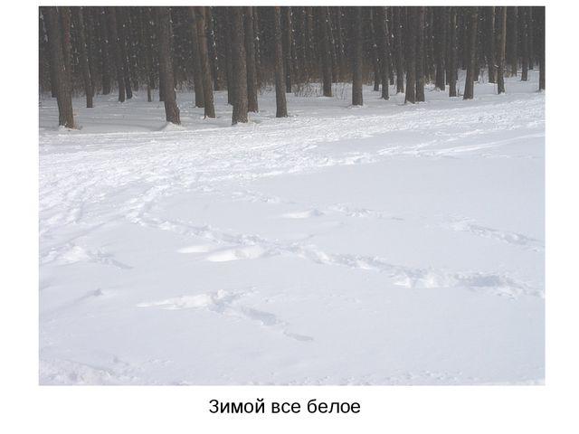 Зимой все белое