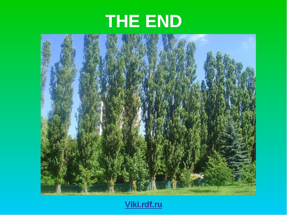 THE END Viki.rdf.ru