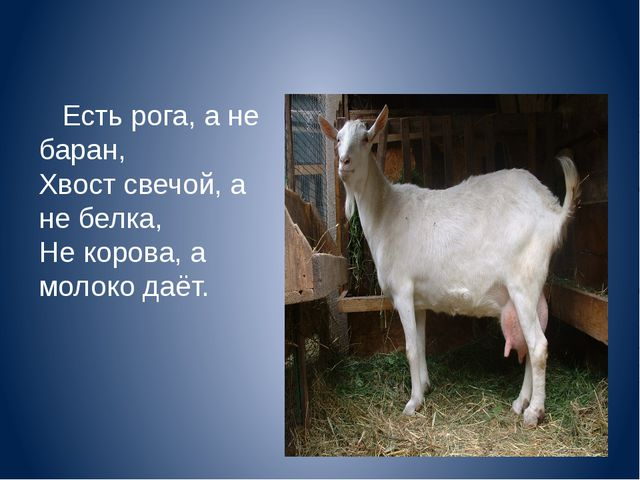 Есть рога, а не баран, Хвост свечой, а не белка, Не корова, а молоко даёт.