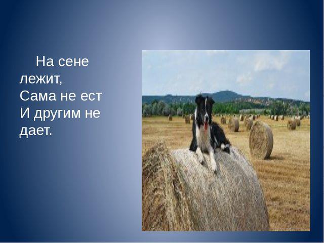 На сене лежит, Сама не ест И другим не дает.